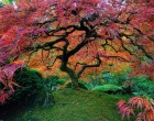 Íme, a világ 17 leggyönyörűbb fája !Negyedik meseszép