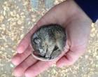 Megfagyva talált rá erre a pici mókusra - haldoklott, de könnyfakasztó dolog történt