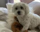 Kivégezte a vihar a kutya plüssmaciját : fantasztikus a gazda reakciója