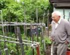 Egy idős olasz bácsi fel akarta ásni a kertjét. Ám ekkor sürgős üzenetet kapott fiától a börtönből: