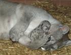 22 megható fotó, amely bebizonyítja, hogy az állatok szeretetből készültek