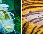 23 szemfelnyitó fotó, amelyek bebizonyítja, hogy a természet tele van rejtélyekkel