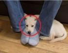 Ezért fekszik a kutya a lábadon – Ezt nem tudtuk, és a többi 8 okot sem