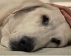 Egy állatorvos szemfelnyitó üzenete, ami minden gazdinak ébresztőt fúj: így viselkednek az állatok elaltatás előtt