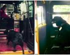 Ez a kutya egyedül buszozik minden nap, hogy a helyi parkban játszhasson -videó