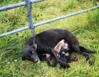 Megmentették a láncra vert kutyát, aki hat kölykéről gondoskodott!Jutalmazzuk meg a hőst sok szívecskével