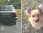 Gratulálok - FAP -580, ahogy kidobtátok a haladó autóból ezt a szerencsétlen kutyust!